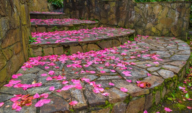 Fallen petals and stairs stock images
