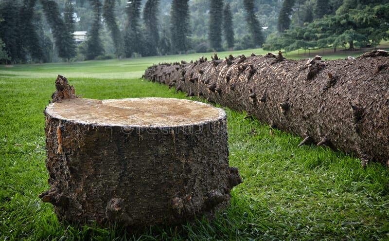 Fallen pine tree stock photo
