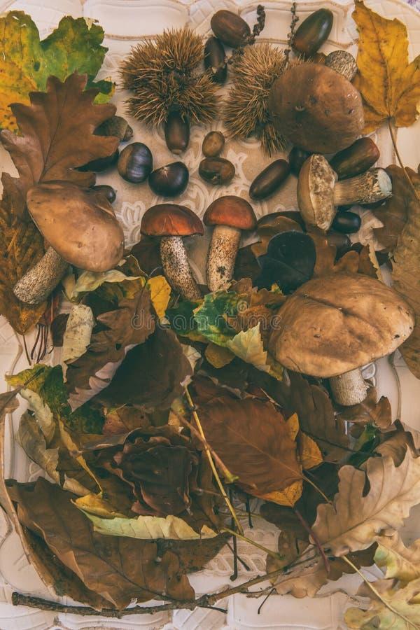 Fallen Sie auf dem Tisch mit mit Pilzen und Herbstfrüchten stockfoto