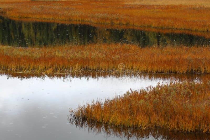 Fallen Sie an einem regnerischen Tag in Nancy Lake, Alaska lizenzfreies stockbild