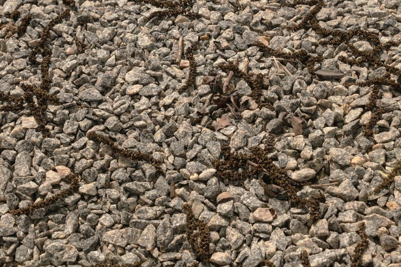 Fallen staminate flowers of walnut on a layer of light gravel in the sun brightening royalty free stock image