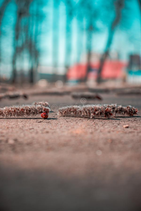 Fallen things from trees bokeh stock image