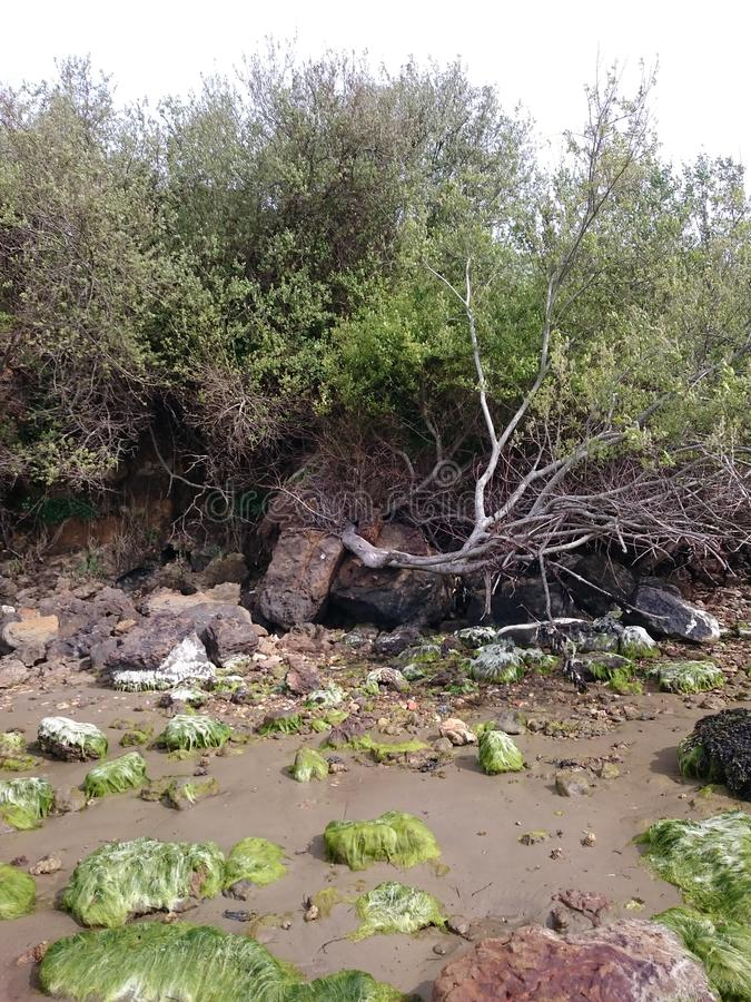 fallen tree royaltyfri bild