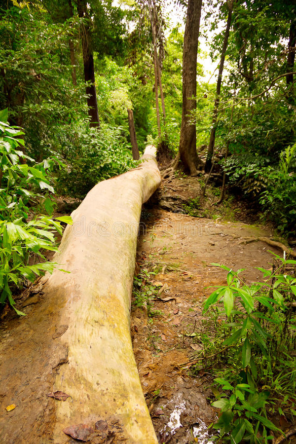 Download Fallen tree stock image. Image of tropical, interior - 24022809