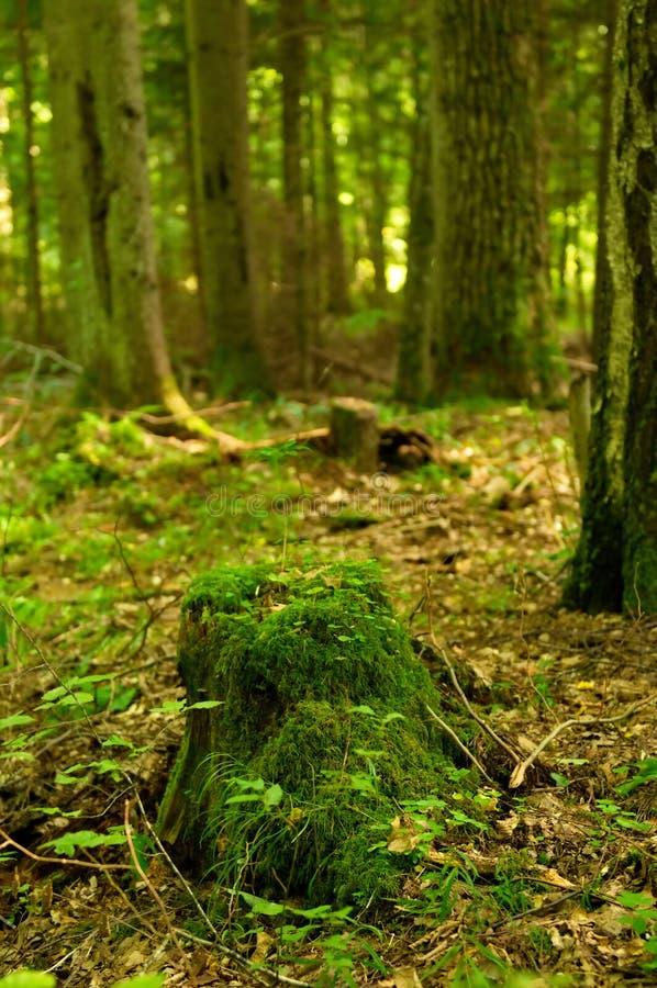 Fallen tree royaltyfri foto
