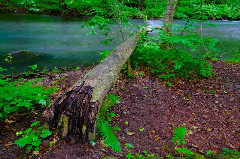 Download Fallen tree stock photo. Image of fallen, walking, reflected - 26476858