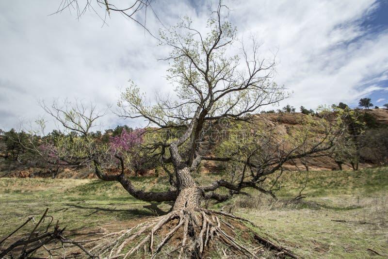 fallen tree arkivfoton