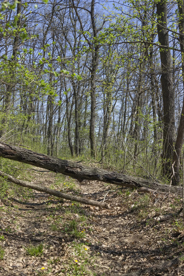 Free Fallen Tree Blocking The Dirt Road 2 Stock Photos - 53798183