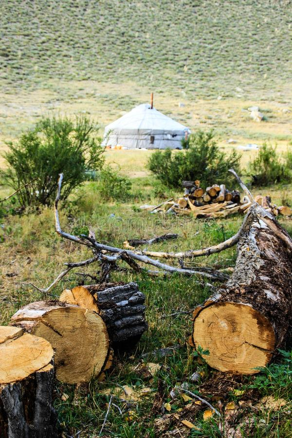A fallen tree, branches near the traditional home of the nomadic peoples of Mongolia - a yurt royalty free stock image