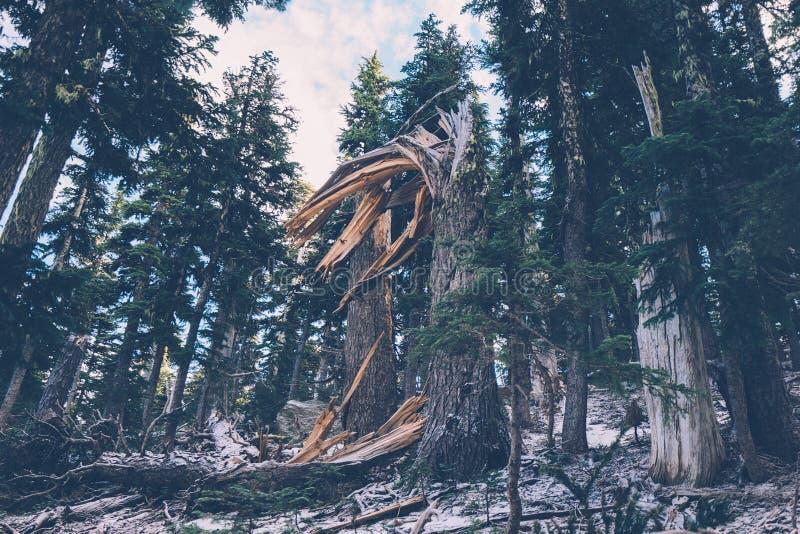 Fallen Tree Free Public Domain Cc0 Image