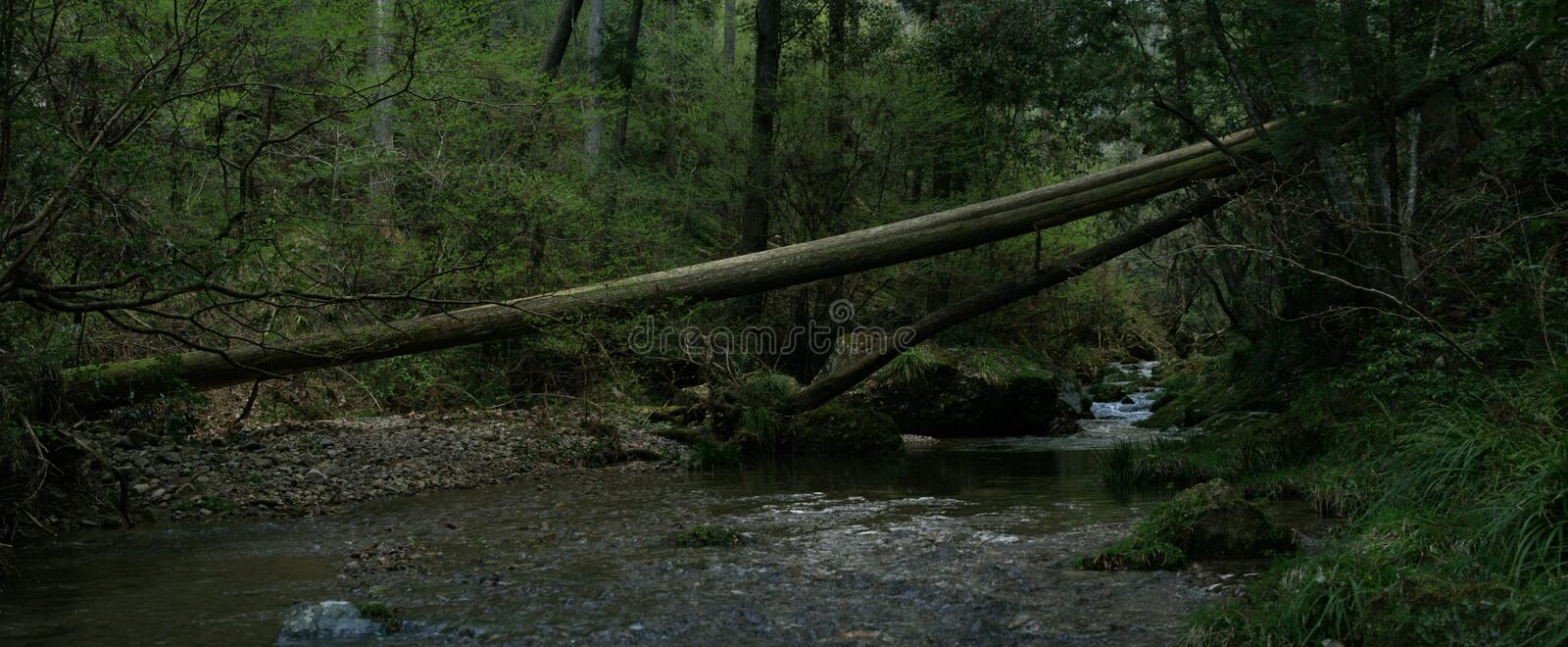 Fallen tree in the forest across the river. Fallen trees in the forest across the river royalty free stock image