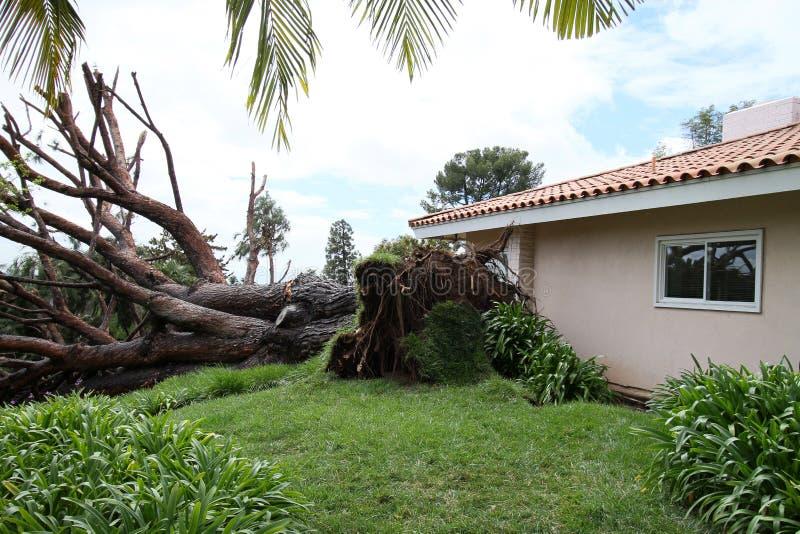 Download Fallen Tree in Fullerton 3 editorial stock photo. Image of crash - 18891678