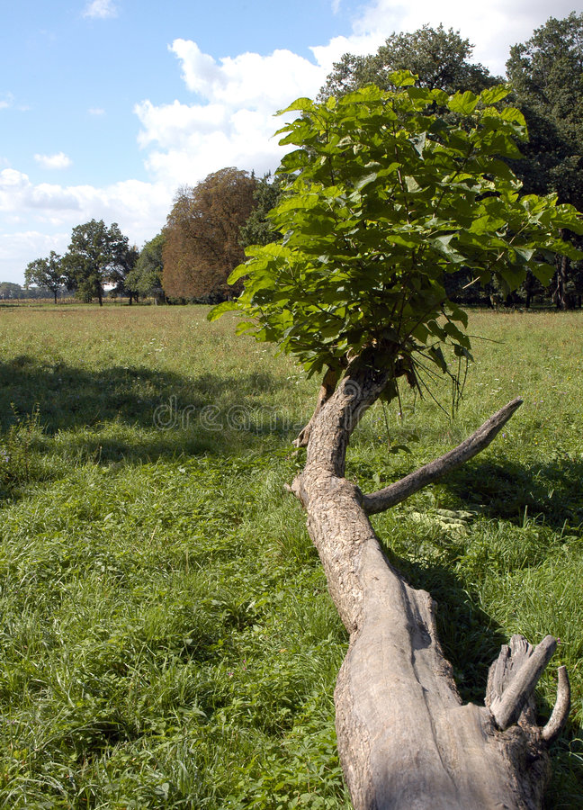Download Fallen tree in green field stock image. Image of outdoors - 1414681