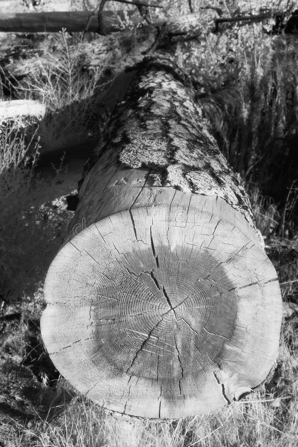 Fallen Tree Infrared royalty free stock image