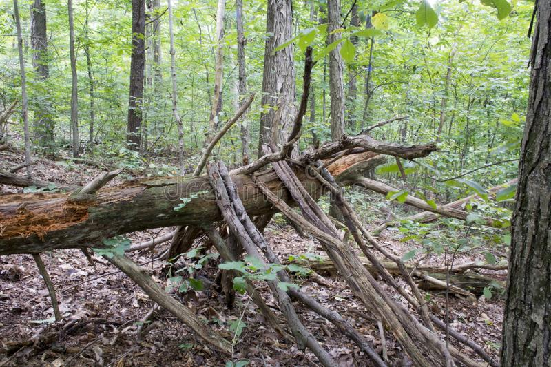 Fallen tree with limbs royalty free stock images