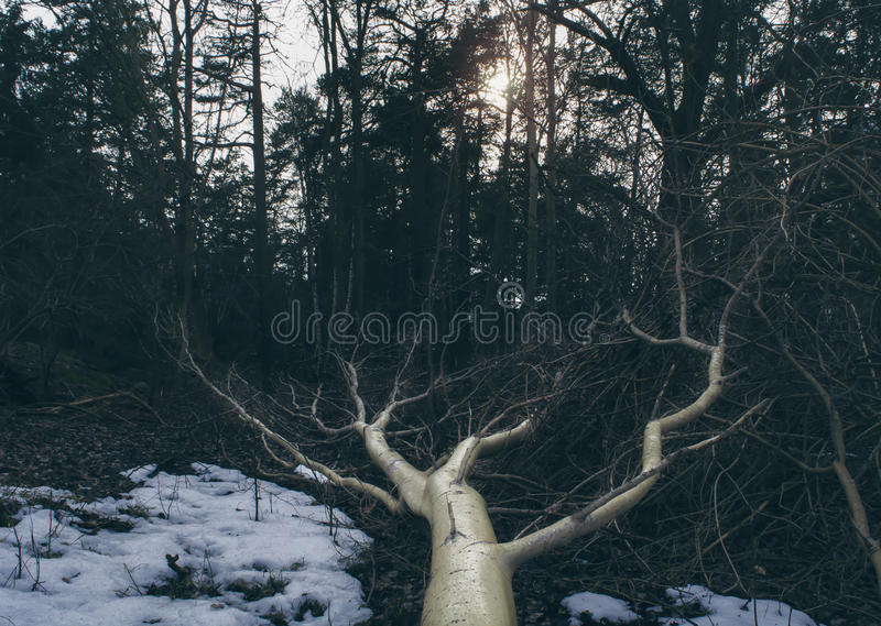 Fallen tree in mysterious forest. The trunk and branches glowing softly royalty free stock photo