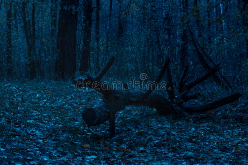 Fallen tree in a mysterious nocturnal forest close up royalty free stock image