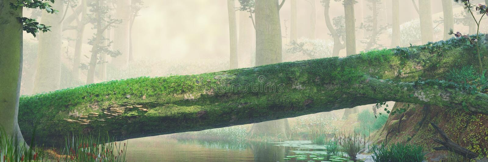 Fallen tree, natural bridge in magical forest, beautiful fantasy forest landscape. Tree river crossing in the woods, panorama banner royalty free stock photo