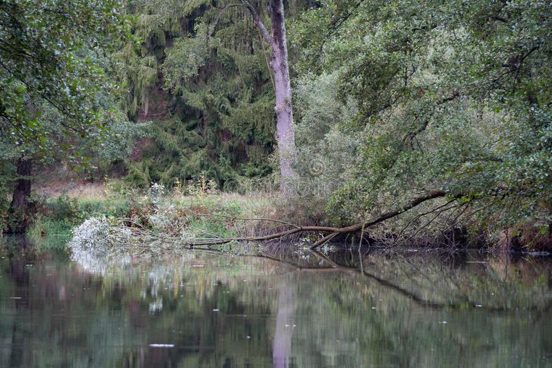 Fallen tree in the river royalty free stock photos
