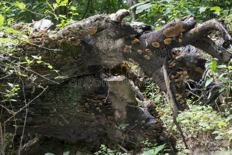 Fallen tree with rock stock photography
