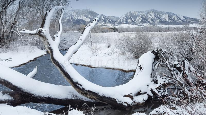 Fallen tree by the South Boulder Creek Trail in Colorado stock images