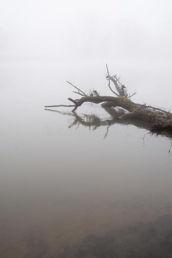 Fallen tree in still water with moody dense fog royalty free stock photos