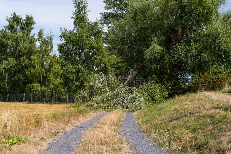 A fallen tree from a strong wind lying on a dirt road in a field in western Germany. stock photos