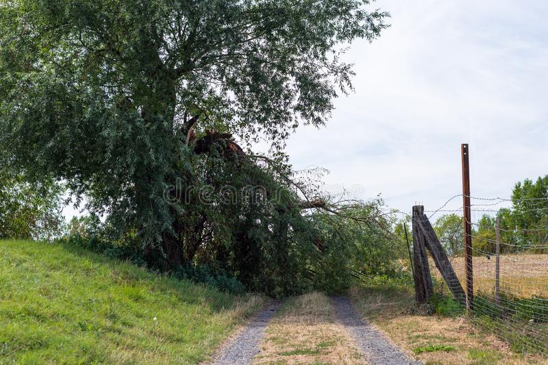 A fallen tree from a strong wind lying on a dirt road in a field in western Germany. A fallen tree from a strong wind lying on a dirt road in a field in western royalty free stock photos