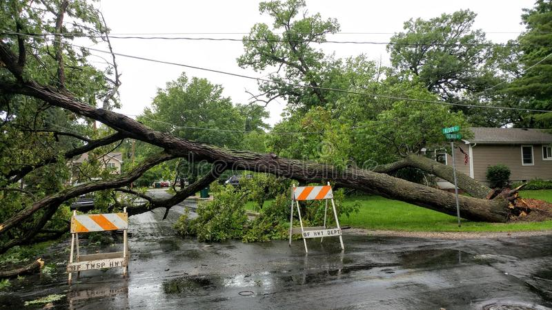 Fallen Tree that took Power Lines Down. A fallen tree that took down power lines in Pell Lake, Wisconsin, Bloomfield Township on a rainy stormy day with Caution stock photo