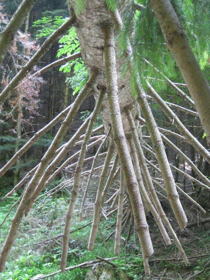 fallen-tree-trunk stock images