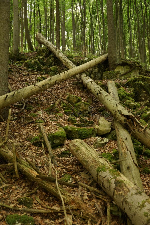 Fallen tree trunks building crossing each other stock image