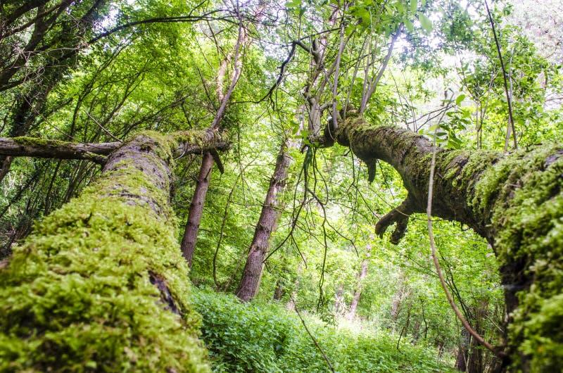 Fallen tree woodlands stock photo