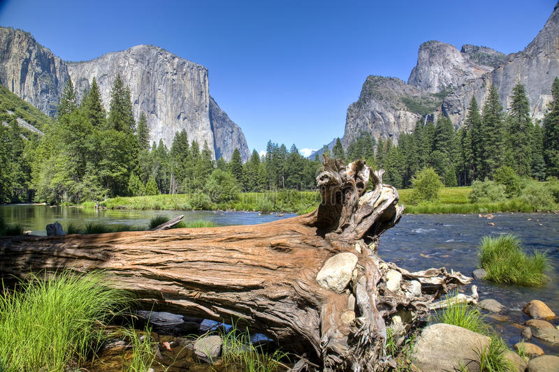 Fallen Tree in Yosemite royalty free stock images