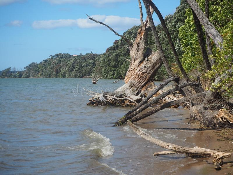 Fallen trees on beach the beauty after the storm stock images