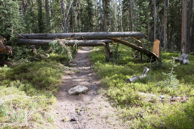 Fallen Trees Blocking the Trail stock images