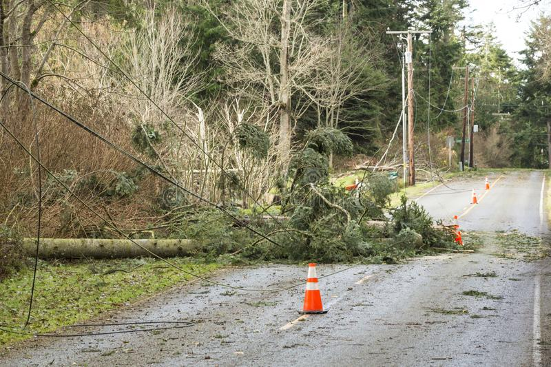 Fallen trees and downed power lines blocking a road; hazards after a natural disaster wind storm. Fallen trees and damaged downed power lines blocking a road stock photo