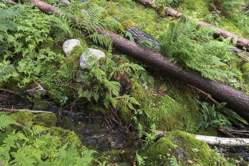 Fallen trees near Langfoss in Norway royalty free stock photography