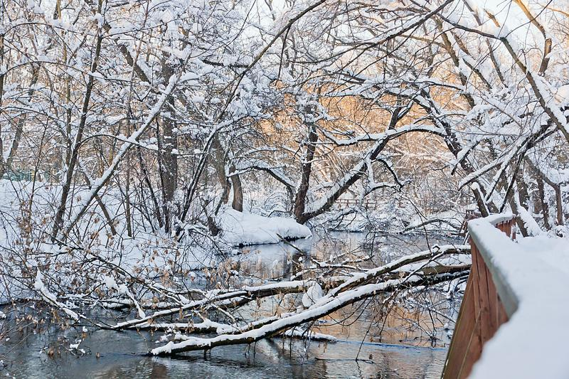 Fallen trees in a river in winter park royalty free stock photo