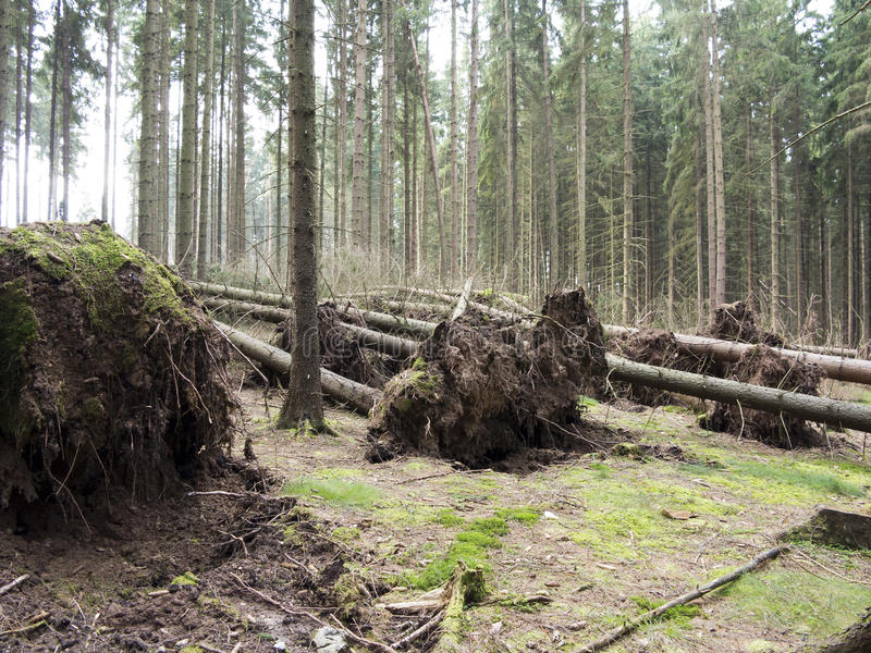 Download Fallen trees stock image. Image of nobody, root, stormfall - 35598107
