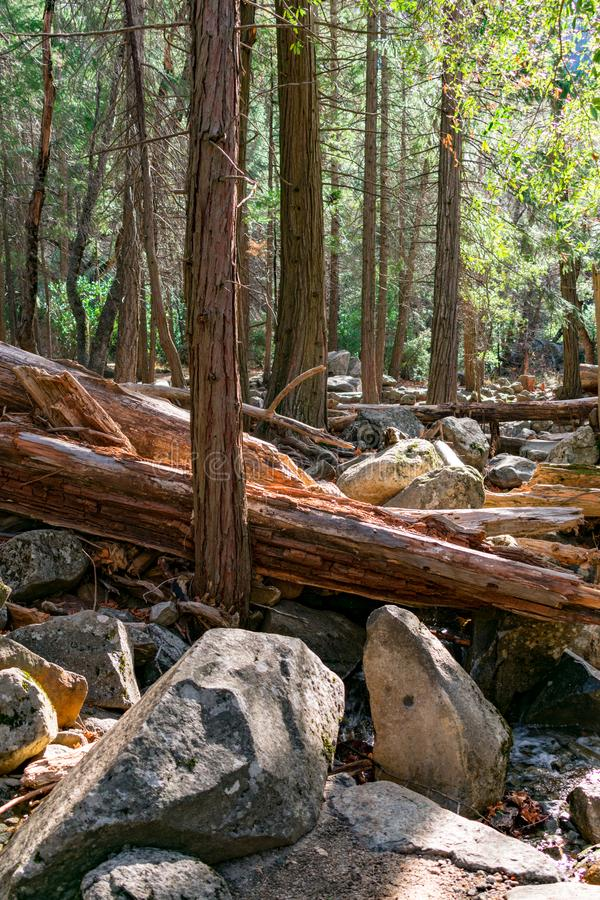 Fallen Trees at Yosemite National Park. Many trees fell this Winter with the flooding, storms and snow royalty free stock photo
