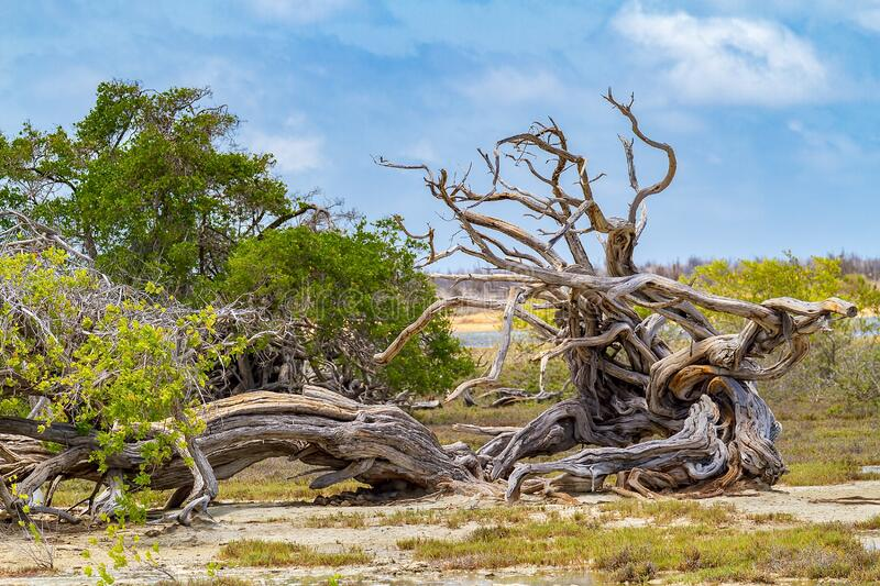 Fallen whimsical dead tree lies in nature stock photo