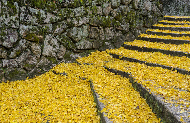 Fallen yellow leaves of ginkgo tree on steps royalty free stock images