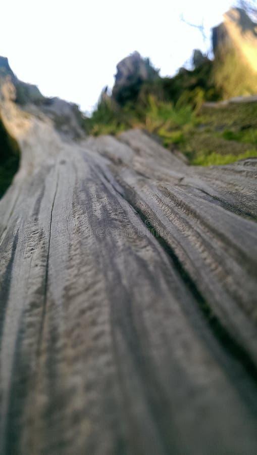Fallende Bäume lizenzfreie stockfotos