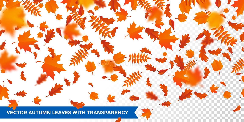 Fallende Blätter des Herbstes kopieren transparenten Hintergrundahorn, Eiche, Birke, cestnut Laubfall vektor abbildung