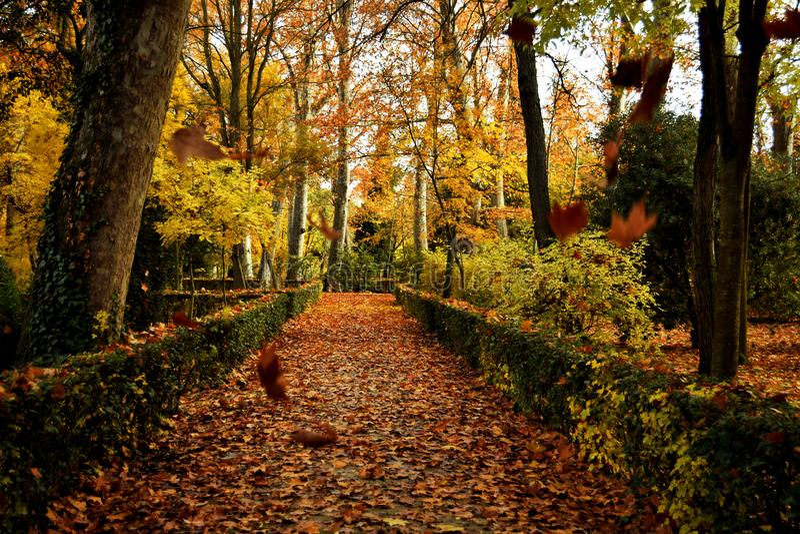 Fallende Bl?tter im Herbst lizenzfreies stockbild