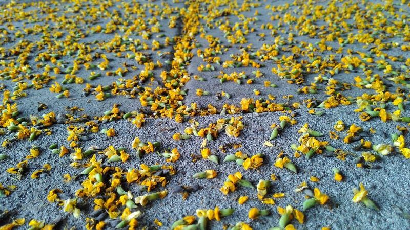 Fallende Blume auf der Straße im Herbst stockfotografie