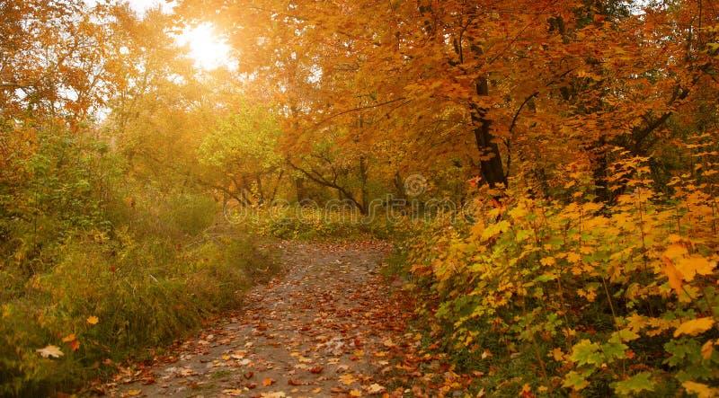 Fallende Eiche verlässt auf dem szenischen Herbstwald stockfotos