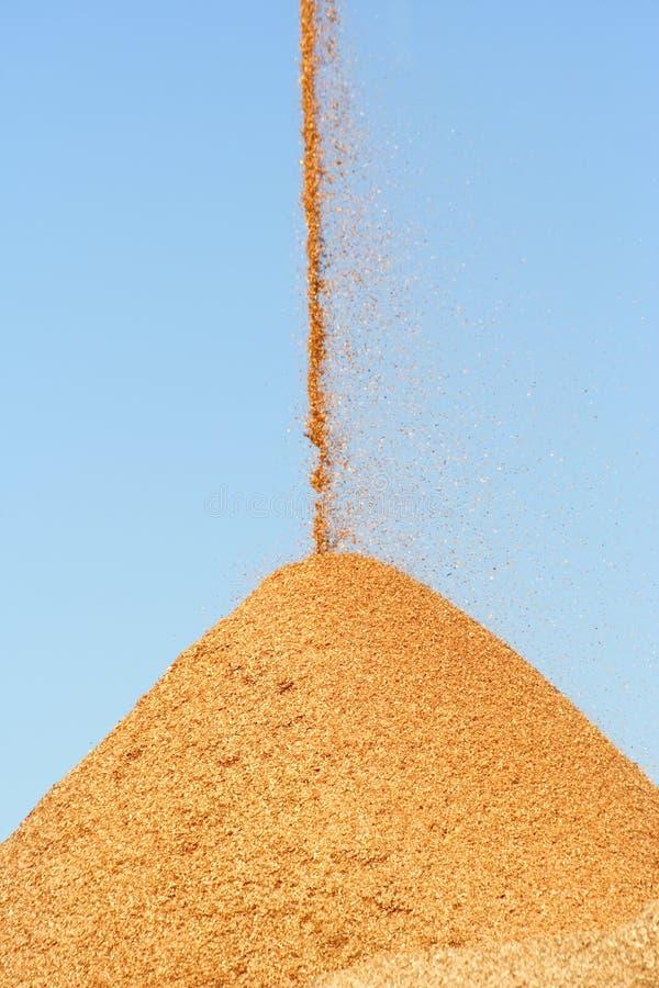 Fallende hölzerne Chips stockbilder