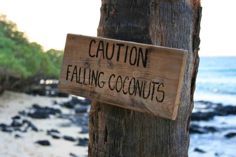 Fallende Kokosnüsse der Vorsicht stockfotos