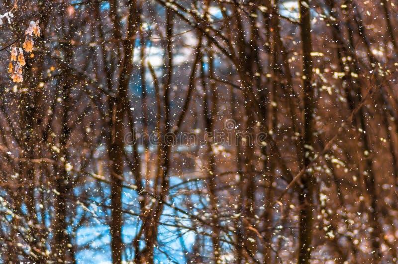 Fallende Schneenahaufnahme, natürlicher Winterhintergrund stockfoto